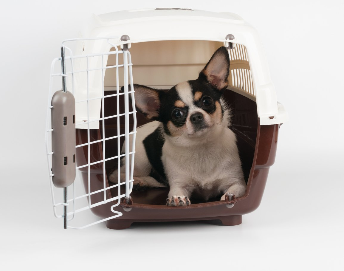 Transporte de animais em carros: opção caixa de transporte
